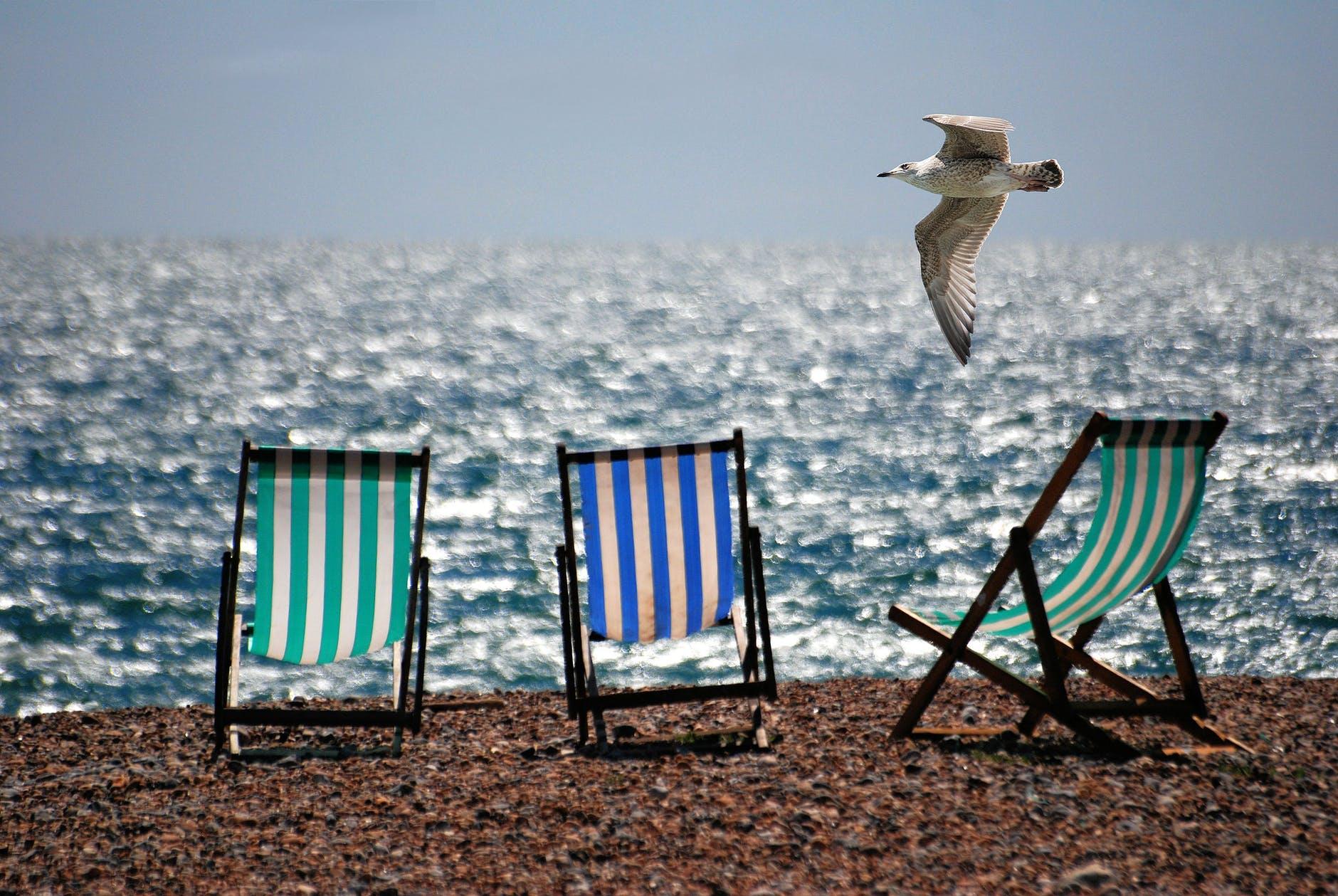 sea beach summer seagull
