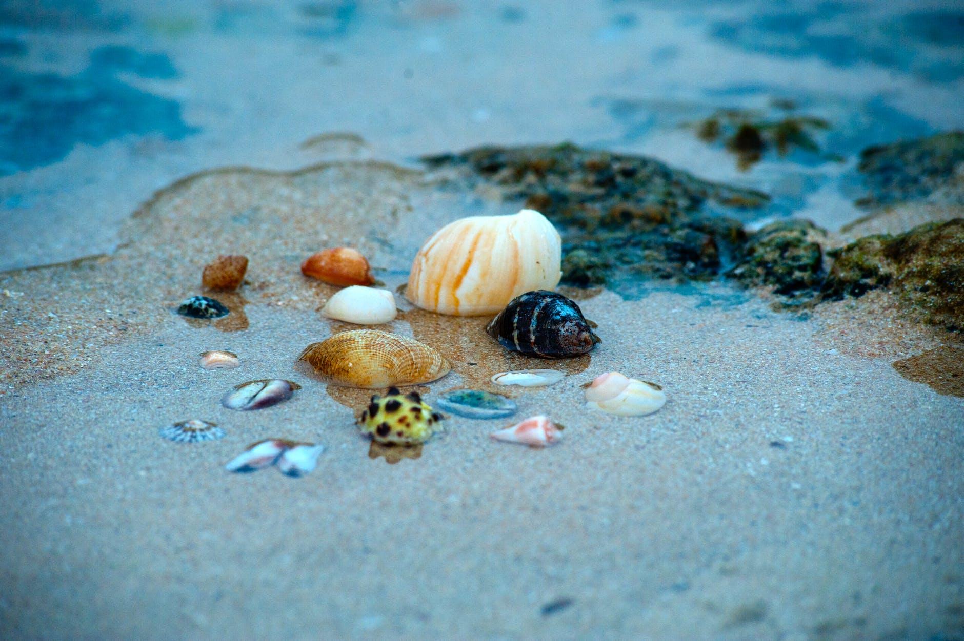 beach ocean sand sea